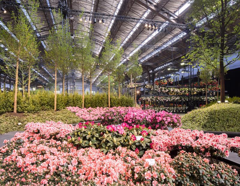 Floralienhal-2cKarin_Borghouts.jpg